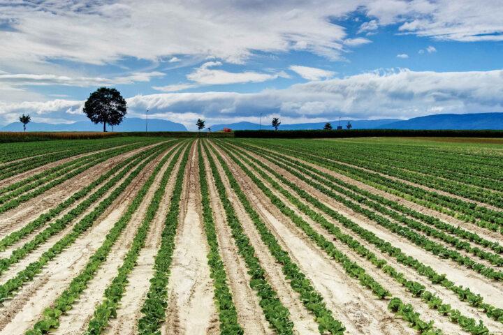 Massnahmen für einen sinnvollen Umgang mit Pflanzenschutzmitteln