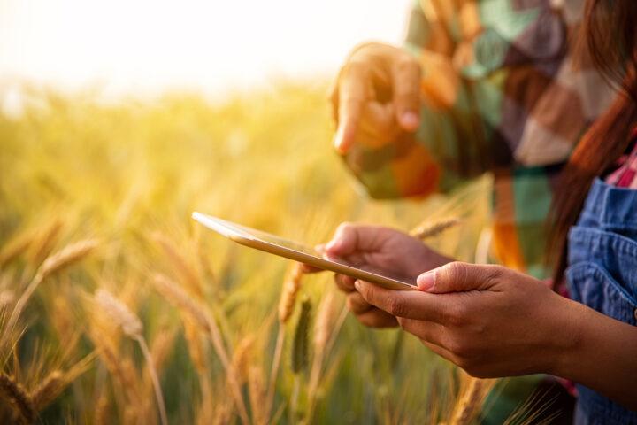 Hightech im Pflanzenschutz: «GPS statt Feuerwehrschaum»