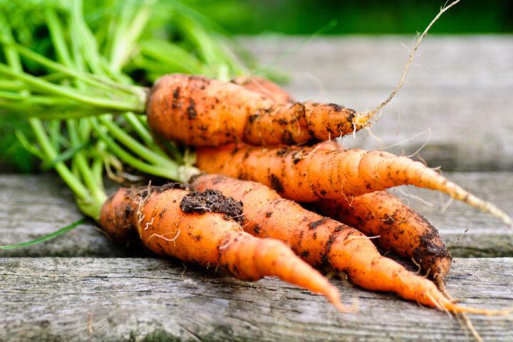 Gemüseknappheit führt zu höheren Preisen