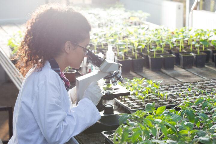 Auch Moratorien beschädigen Forscherkarrieren