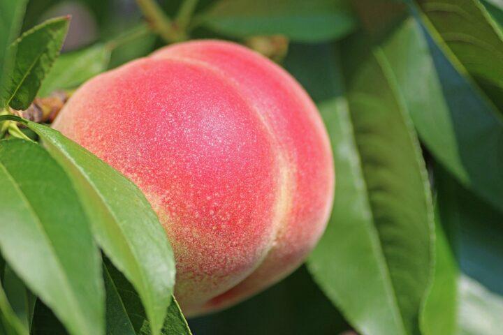 Preise für Früchte steigen