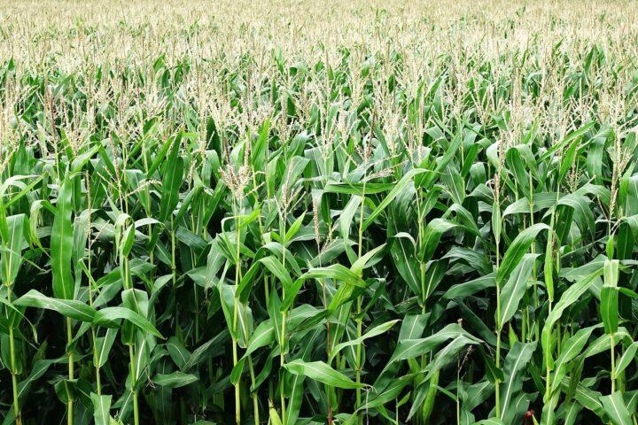 Globale Fakten zu Welternährung und Landwirtschaft