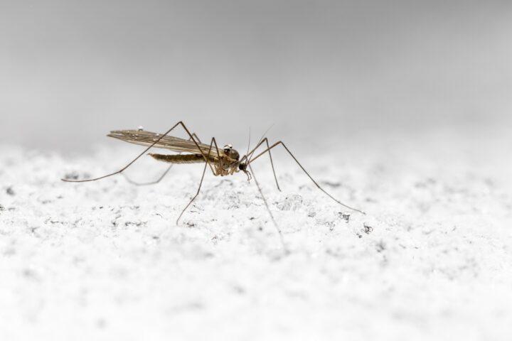 Biozide gegen Malaria